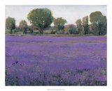 Lavender Field I Print by Tim