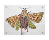 Clown Moth Reprodukcja zdjęcia autor Federico Cortese