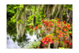 Spanish Moss and Azalea, South Carolina Photographic Print by George Oze