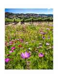 Spring Wildflowers Of Napa Valley Photographic Print by George Oze