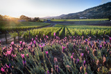 Napa Valley Spring Afternoon Photographic Print by George Oze