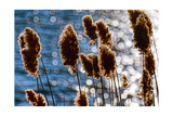 Lakeside Grass In Reflected Sunlight Photographic Print by George Oze