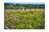 Napa Valley Wildflowers And Grapevines Photographic Print by George Oze