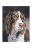 Lizzie Springer Spaniel Prints by Edie Fagan