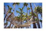 Hammock in a Palm Grove, Puerto Rico Photographic Print by George Oze