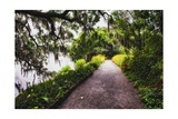Low Country Walking Path, Charleston,SC Photographic Print by George Oze