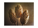 Three Illuminated Pods Photographic Print by George Oze