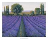 Lavender Field II Prints by Tim