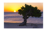 Eagle Beach Sunset witha Divi Tree, Aruba Photographic Print by George Oze