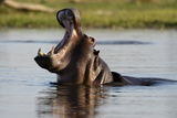 Hippopotamus Photographic Print by Sergio Pitamitz