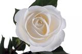 Roses Reproduction photographique par Fabio Petroni