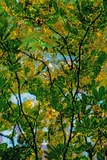 Tree Photographic Print by André Burian