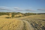 Landscape around Pienza Photographic Print by Guido Cozzi
