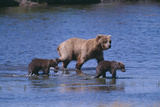 Grizzly Cubs with Mother in River Photographic Print by  DLILLC