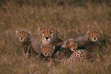 Cheetah with Cubs in Grass Photographic Print by  DLILLC