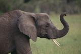 Elephant Photographic Print by  DLILLC