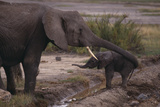 Elephant Mother Helping Baby Photographic Print by  DLILLC