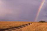 Rainbow on the Savanna Photographic Print by  DLILLC