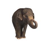 Indian Elephant Fotodruck von  DLILLC