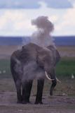 Elephant Dust Bathing Photographic Print by  DLILLC