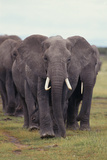 Parade of Elephants Photographic Print by  DLILLC