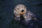 River Otter Swimming Photographic Print by  DLILLC