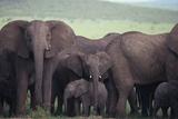 Elephants Photographic Print by  DLILLC