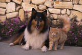 Collie and Yellow Cat on Sidewalk Photographic Print by  DLILLC