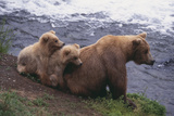 Grizzly Cubs with Mother by River Photographic Print by  DLILLC