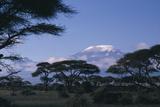 Kilimanjaro and Acacia Trees Photographic Print by  DLILLC