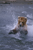 Grizzly Splashing in Water Photographic Print by  DLILLC