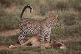 Leopard with Impala Kill Photographic Print by  DLILLC