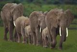 Elephant Family Photographic Print by  DLILLC