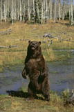 Grizzly Bear Standing by Water Photographic Print by  DLILLC