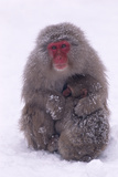 Japanese Macaque with Baby in Snow Photographic Print by  DLILLC