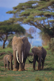 African Elephant with Young Photographic Print by  DLILLC