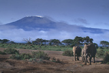 Elephants and Mountain Photographic Print by  DLILLC