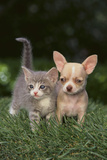 Chihuahua Puppy and a Kitten Photographic Print by  DLILLC