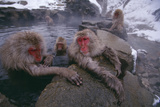 Japanese Macaques in Hot Spring Photographic Print by  DLILLC