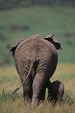African Elephant Walking with Young Fotodruck von  DLILLC