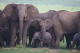 African Elephant Herd with Young Photographic Print by  DLILLC