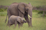 African Elephant Mother and Calf in Grass Photographic Print by  DLILLC