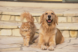 House Cat and Golden Retriever Photographic Print by  DLILLC
