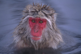 Japanese Macaque in Hot Spring Photographic Print by  DLILLC