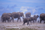 African Elephant Herd Walking Photographic Print by  DLILLC