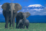 African Elephants with Calf Reproduction photographique par  DLILLC
