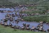 Wildebeest and Zebras Sharing a Waterhole Photographic Print by  DLILLC