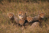Cheetah Mother and Cubs Photographic Print by  DLILLC