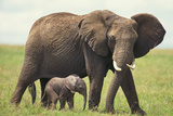 African Elephant Mother and Young in Grass Photographic Print by  DLILLC