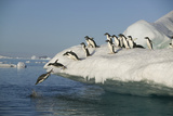Adelie Penguins Jumping off an Iceberg Photographic Print by  DLILLC